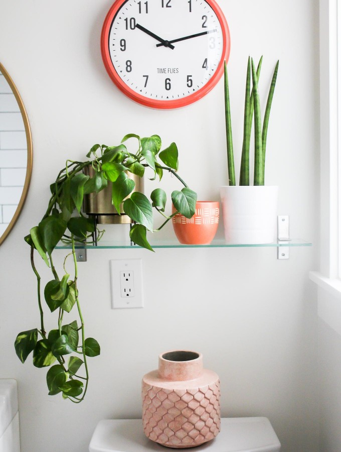plants on shelf in bathroom